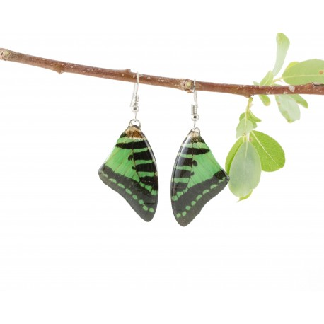Real Butterfly Wing Green Tail Earrings