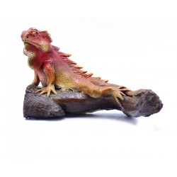 Teak Red Iguana Sculpture Woodland Reptile Iguana Statuette