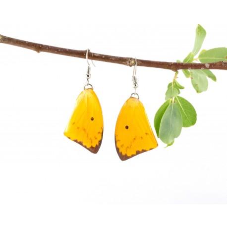 Yellow Tail Butterfly Wing Earrings