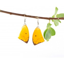 Real Butterfly Wing Transparent Yellow Tail Earrings