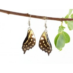 Real Butterfly Wing Catopsilia Swallow Tail Earrings