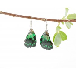 Real Butterfly Wing Backtail Green Earrings