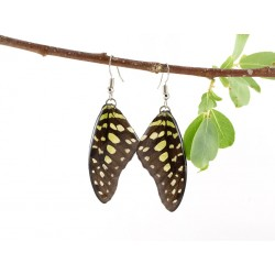 Real Butterfly Wing Graphuim Agamemnon Earrings