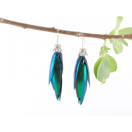 Jewel Beetle  Shell Illuminent Multi Color Earrings