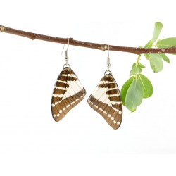 Real Butterfly Wing Pathysa Antiphates Earrings