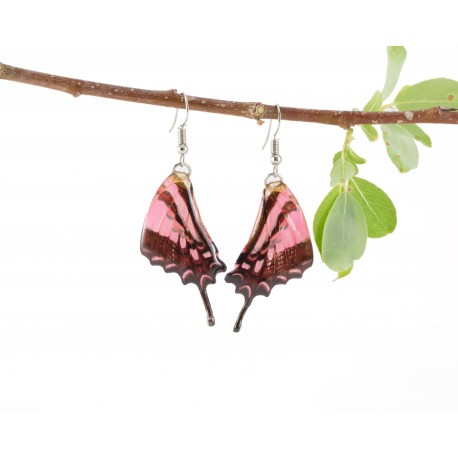 Real Butterfly Wing Pink Swallow Tail Earrings