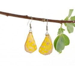 Real Butterfly Wing Earrings Transparent Sulphur Yellow Forewing