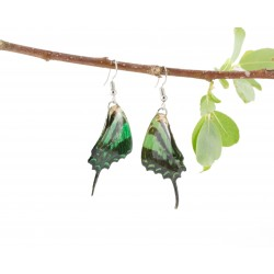 Real Butterfly Wing Green Swallow Tail Earrings