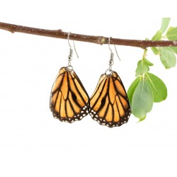 Real Butterfly Wing Monarch Backtail Earrings