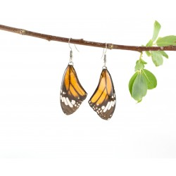 Real Butterfly Wing Monarch Forewing Earrings