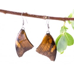 Real Butterfly Wing Brown Forewing Butterfly Earring