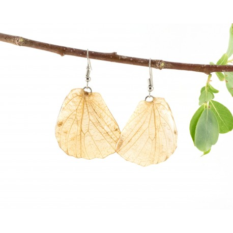 Real Butterfly Wing Clear Transparent Earrings