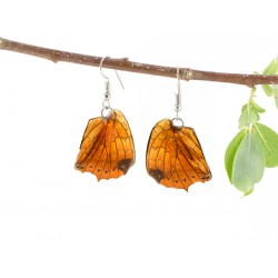 Real Butterfly Wing Natural Brown Swallow Tail Earrings