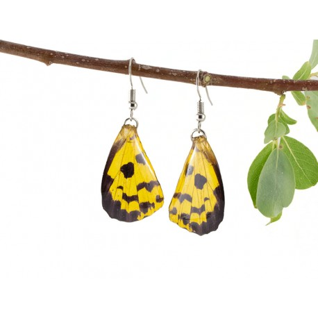 Real Butterfly Wing Speckled Yellow Earrings